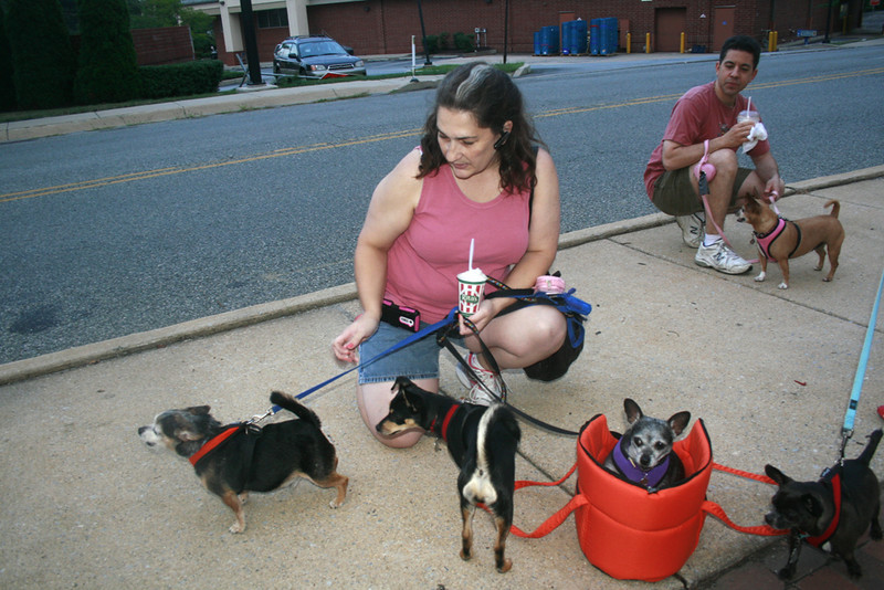 Waiting for their treats are Oscar, Lola, Jose and Buddie with owner Michele Andrush behind her is her husband, Kevin with Cocoa of Media.