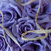 Purple Party - Lavender Roses