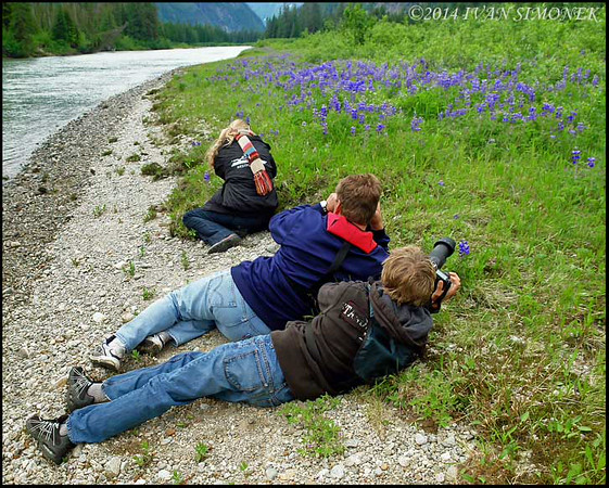 """STALKING WILDFLOWERS"",Shakes Slough,Alaska,USA."