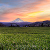 Wheat Fields of Oregon