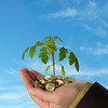 Small plant sprouting from a pile of golden coins held in a hand, against blue skies - concept for business, innovation, growth, new ideas and money