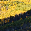 Aspens Light and Shadow