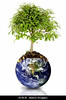 Fig 8.27 / Something that signifies planet / earth / connectedness / to replace existing image on page 219 from Mas 1e which is not availble  Choice 5 of 11  AYJKJK tree growing from the earth over a white background