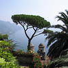 """The Famous Tree"" Viewed from Rufolo Gardens, Ravelo, Italia"