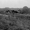"""Three Horse Hay Wagon"" H.A.Beasley 1899 Maryland From Glassplate Negative"