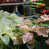 Title: Pointsetta at Grand Central Flower Stall
