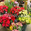 Title: Christmas at a Flower Stall in New York City