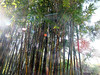 Bamboo on Walk from Universal CityWalk 26-09-2013 21-54-15