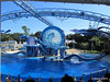 Dolphin Show Blue Horizons Theater SeaWorld 21-09-2013 14-36-31