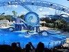 Dolphin Show Blue Horizons Theater SeaWorld 21-09-2013 15-18-03