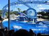 Dolphin Show Blue Horizons Theater SeaWorld 21-09-2013 15-16-26