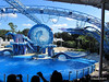 Dolphin Show Blue Horizons Theater SeaWorld 21-09-2013 15-18-16