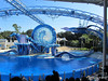 Dolphin Show Blue Horizons Theater SeaWorld 21-09-2013 14-35-59