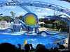 Dolphin Show Blue Horizons Theater SeaWorld 21-09-2013 15-18-58