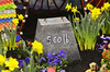 An exhibit at  the Peter Becker Community's annual Flower Show.   Tuesday, March 11, 2014.  Photo by Geoff Patton