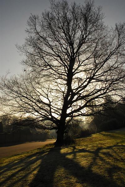 January 14, Oak Tree, Hook Heath, Woking.