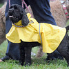 Pat Christman  A dog at Saturday's Arf Walk sports a rain coat in an attempt to stay dry.