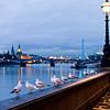 Thames Seagulls