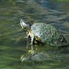 TURTLES and TORTISES  16
