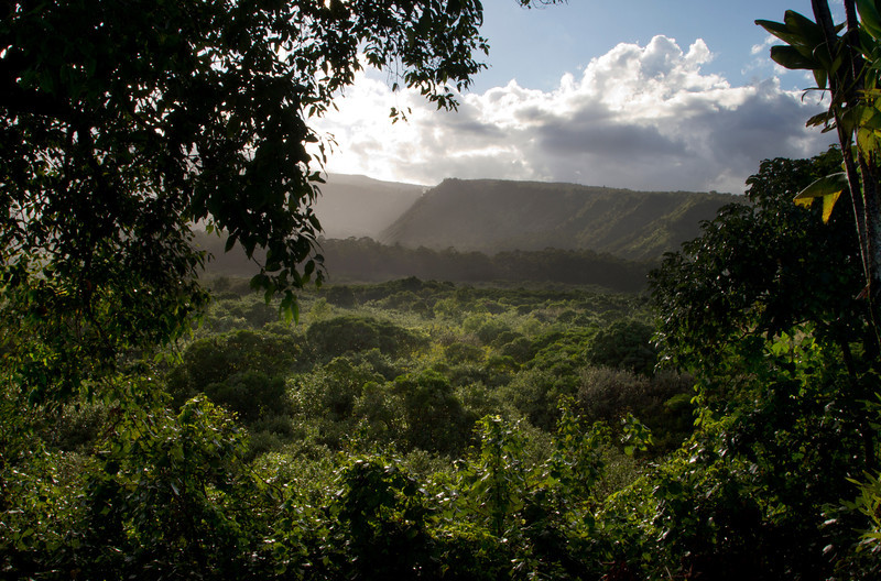 Wailua Valley State Wayside, Maui, Hawaii