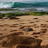 Ho'okipa Beach Park on the North Shore of Maui, Hawaii
