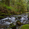 The rainforest north of town- Victoria, Vancouver Island, BC, Canada