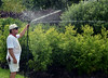 Groundskeeper Walt Albright adjusts a sprinkler as he waters trees and shrubs grown for the Rhoads Garden along Weber Road in Worcester Township on a warm and sunny Friday afternoon July 11,2014.Photo by Mark C Psoras/The Reporter