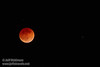 The moon in total eclipse with a star to its right (4/15/2014) TAMRON SP 150-600mm F/5-6.3 Di VC USD A011 @ 600mm f6.3 1/4s ISO10000
