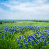 DSR_20130416Ennis Bluebonnets186-Edit