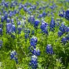 DSR_20130416Ennis Bluebonnets192