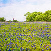 DSR_20130416Ennis Bluebonnets205-Edit