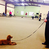 """Donald and Tillie work on """"down/stay"""" at dog training class. (April 2014)"""