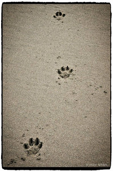 Dog Tracks in the Sand