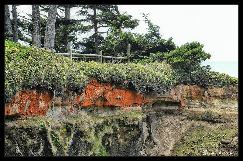 Sea Cliffs and Crust Lichen