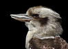 Kookaburra<br /> 3	4	4	-	4	4	4	-	3	3	3	-	32	<br /> accepted		<br /> Sondra Barry