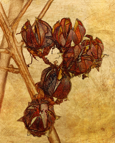Dry Seed Pods<br /> PK Mattingly<br /> <br /> 2nd Place - Creative