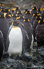 Penguin_King TAB12MK4-48201-Edit