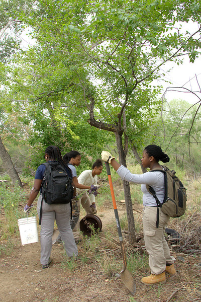 Arizona's LEAF Interns 2013 - exploring Watson Woods restoration area with Prescott Creeks while clearing out debris and invasive plants