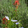 LEAF 2014, Atlanta interns in Wyoming - Heart Mountain Ranch - Indian Paintbrush and Flax