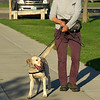 LEAF 2014, Atlanta interns in Wyoming - Heart Mountain Ranch - Weed-Sniffing (and Endangered Animal-Sniffing) Dog Presentation