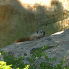 LEAF 2014 Internship Program with The Nature Conservancy in Wyoming - Tensleep Preserve - Marmot