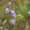 LEAF 2014 Internship Program with The Nature Conservancy in Wyoming - Tensleep Preserve - Harebell