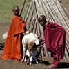 Masai Boys Tending Their Goats