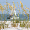 Sailing and Sea Oats-424