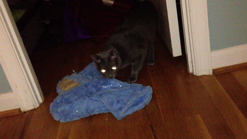2012-11-15 2248 00 -- Ace with growl-inducing slipper prey