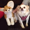 """Pets Are Family Too <p>Bella with her friend and almost twin stuffed animal hanging out together.  </p><p>Browse All Of Our Pets Gifts, Photos and Cat Humor At:  <a target=""""blank"""" href=""""http://bonfiredesigns.com/cats/cat-lover-gifts.htm"""">Dogs and Cats Are Family Shop</a> </p>  <p>Personalize your world with the love of a rescue puppy or kitten, or consider adopting an older pet filled with family love. </p>"""