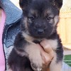 Rocky at 5 weeks old
