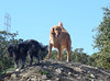 Bode S and Tessa M climb the hills