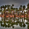 palm-trees-reflecting-pond-1-2