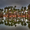 palm-trees-reflecting-pond-1